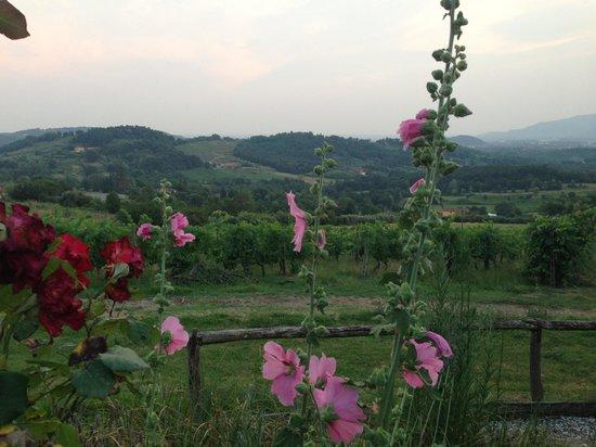 Fattoria Maionchi: downhill view