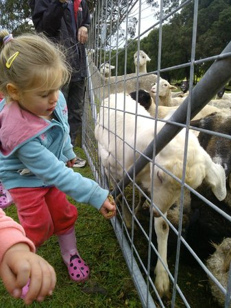 Diamond Forest Cottages: Feeding the animals