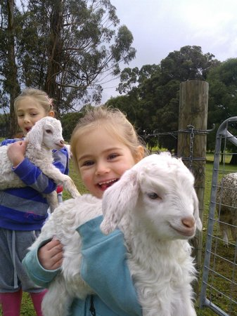 Diamond Forest Cottages: Holding the animals