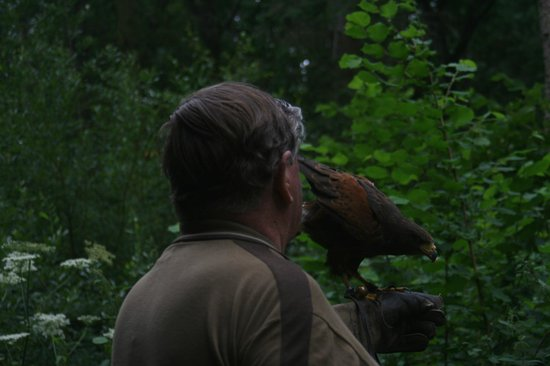 Hawks on Walks: Colin with hawk