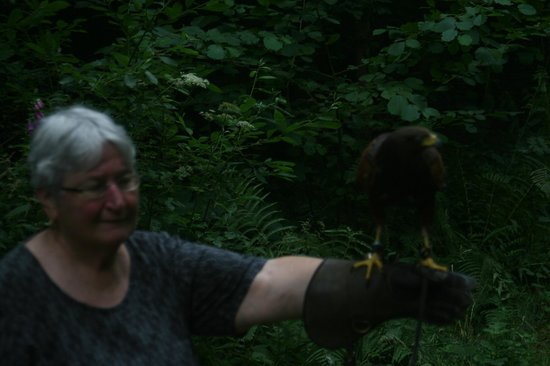 Hawks on Walks: Di and hawk