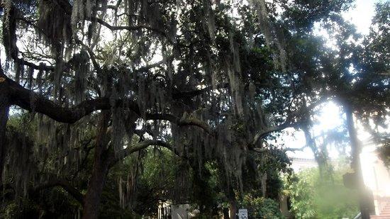 写真SpringHill Suites Savannah Downtown/Historic District枚