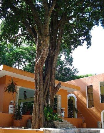 Hotel Hacienda Uxmal Plantation & Museum : l'hotel