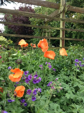Uplands House: Garden