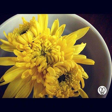Lila Wadi Restaurant : Flowers