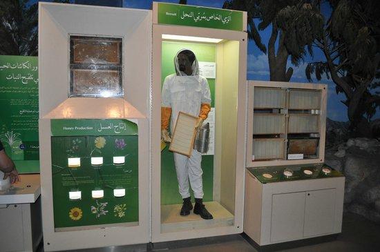 Scitech Technology Center : Пасекчник и виды меда