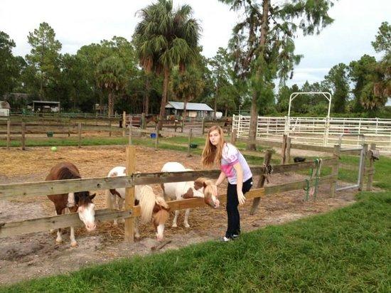 Rockin' N Stables: Feeding the ponies