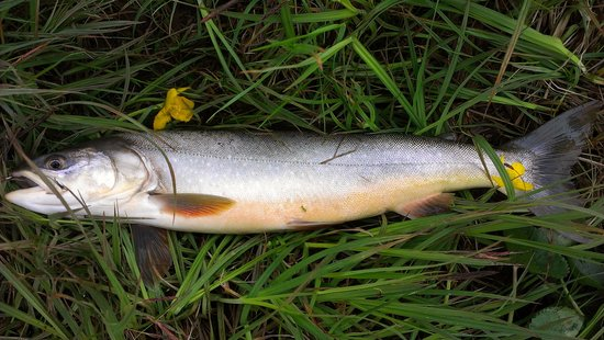 Fish picture of go fishing iceland kopavogur tripadvisor for What goes good with fish