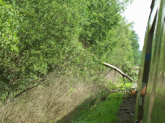 Adirondack Scenic Railroad: tree across tracks