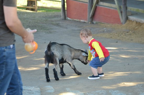 Salt Rock, Sydafrika: Feeding animals is so much fun
