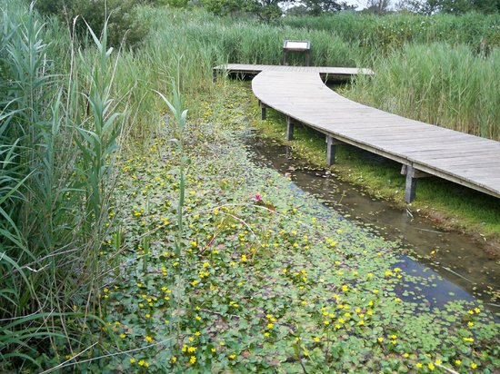 Cosmeston Lakes Country Park: Walking path and pond