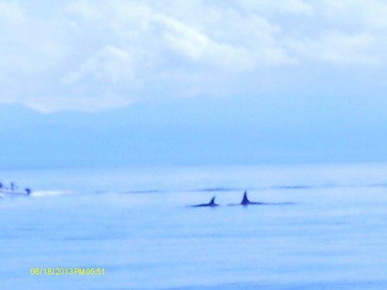 San Juan Excursions 사진