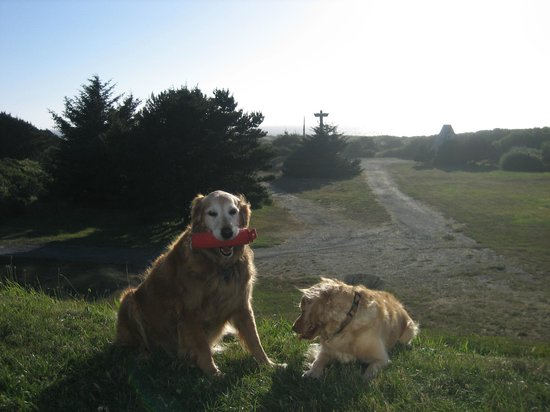 Pacific Reef Hotel - Gold Beach: My goldens outside the Pacific Reef Resort in Gold Beach