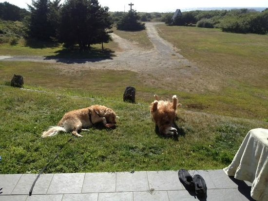 Pacific Reef Hotel: My goldens outside our room in Gold Beach