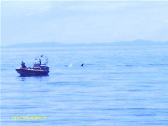 San Juan Excursions: orcas seen on our trip june 17, 2013
