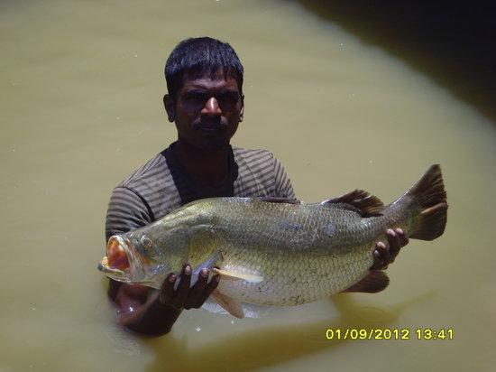Velankanni, India: Culture in the pond Sea boss fish