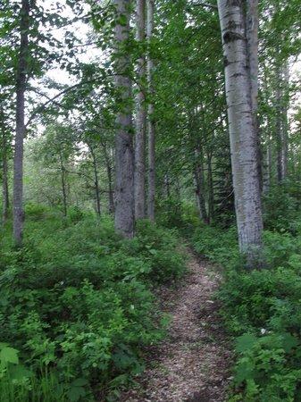 Moul Creek Lodge B & B: Kleiner Verdauungsweg