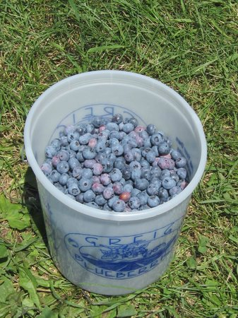 Greig Farm Blueberries