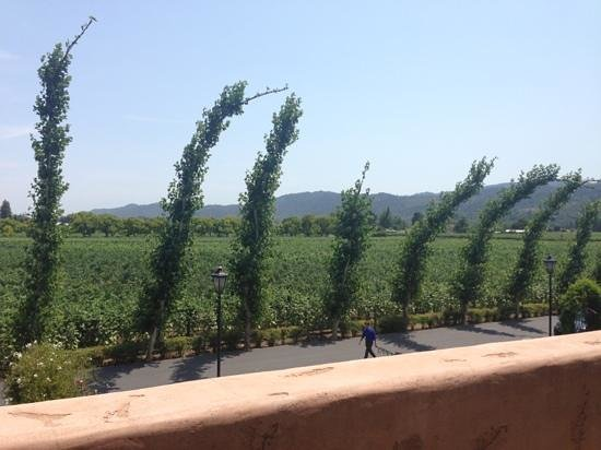 Peju Province Winery : view from balcony