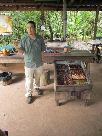 Tirimbina Biological Reserve : Cacao tour