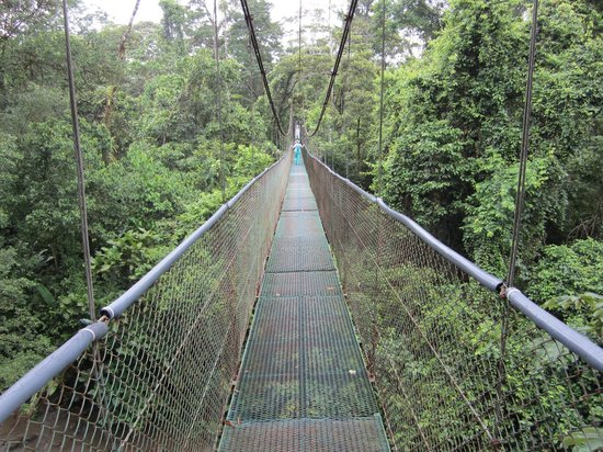 Tirimbina Biological Reserve: Suspension bridge to cacao tour