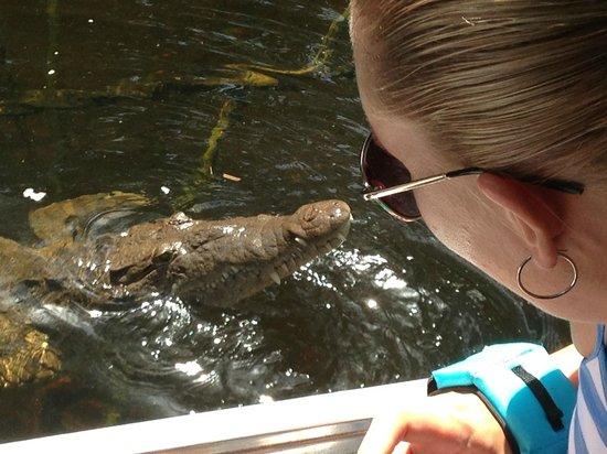 Black River, Jamaïque : Mr Croc upclose