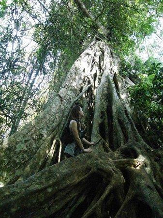Bobbys Apartment and Jungle Tours: Khao Yai