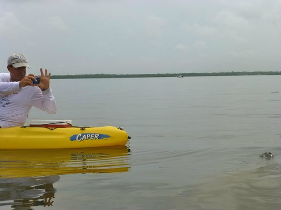 Estero Bay Tours: Again, this is Mike and a manatee