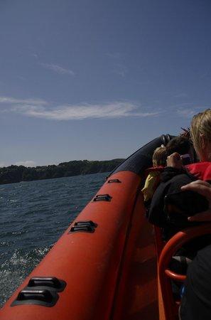 Ilfracombe Sea Safari: See safari
