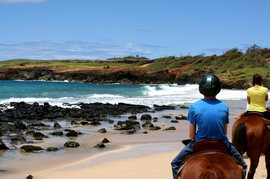 CJM Country Stables : Beach ride