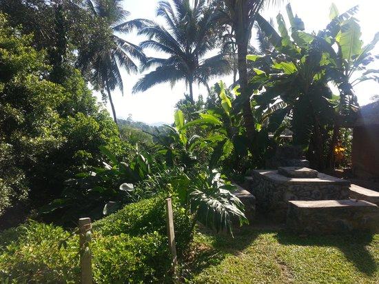 The Kandyan Manor: The garden next to the mud hut