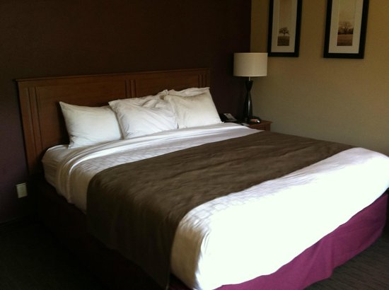 AmericInn Hotel & Suites Duluth South — Black Woods Convention Center : Very comfortable king bed