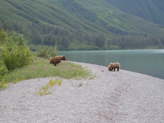 Tower Rock Lodge: Crescant Lake bears