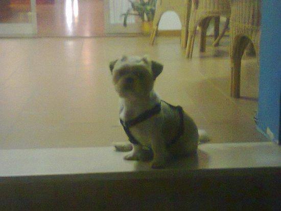 Hotel Internazionale: e anche il nostro cucciolo se la è goduta!!
