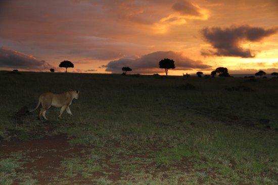 Cheetah Tented Camp: empieza el safari nocturno con una puesta
