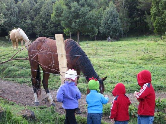Hacienda La Posada de las Nubes: The kids out feeding the horses.