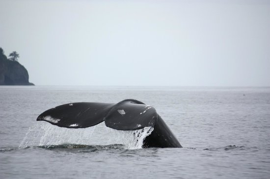 Grey Whale Poop - Picture of Gallant Adventures, Sitka