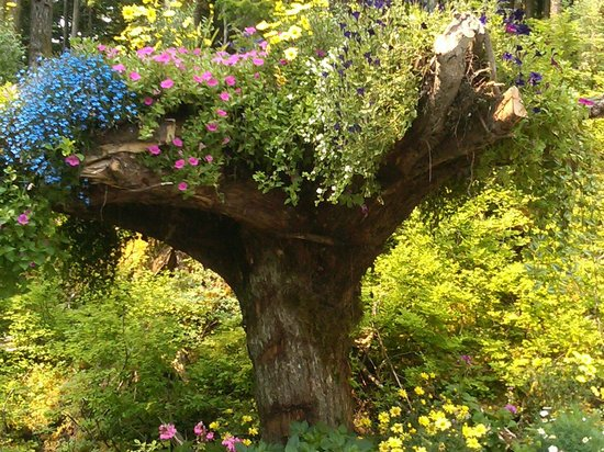 Upside Down Tree In The Gardens Picture Of Glacier