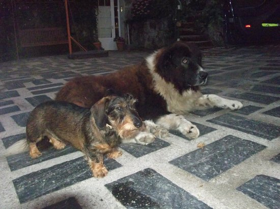 Casa Dos Muros: Este es Beethoven,el perro q tienen en la casa,es muy bueno,aqui con mi perrita DONA