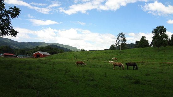 View from my horse of Cades Cove Riding Stables pasture