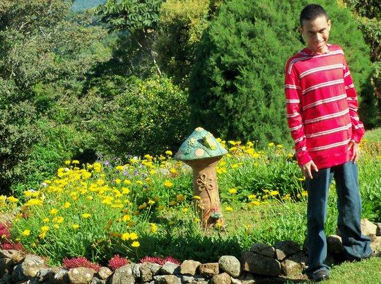 Cabanas El Parador: garden and mushroom