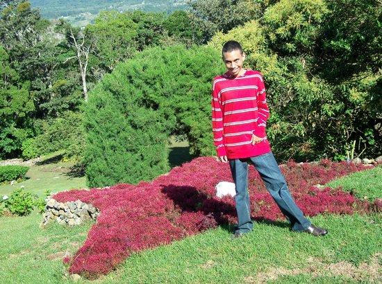 Cabañas El Parador: star of flowers