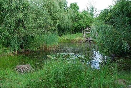 Au Gite du Cerf Argente : Cour arrière, près de l'étang (endroit paisible pour relaxer)