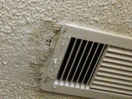 Hilton Garden Inn Hilton Head: mold in bedroom