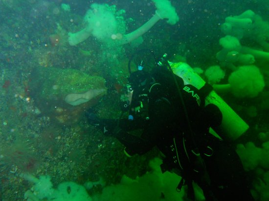Lund Seaside Inn: Iron rocks dive