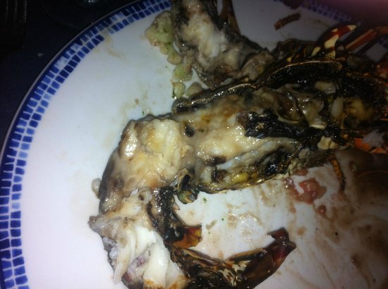 Dreams La Romana: MIL's lobster