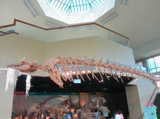 Escape Room Paleontology