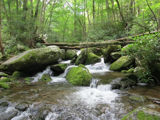 Stream picture of roaring fork great smoky mountains for Roaring fork smoky mountains