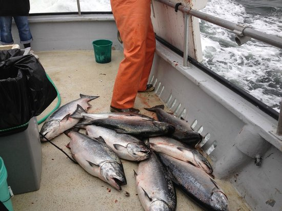 Randy's Fishing Trips and Whale Watching Trips: Some of the catch , being fileted...