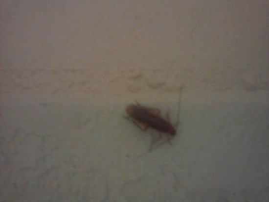 Red Roof Inn Hot Springs: Cockroach already booked the room we didn't want to share